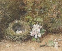 Bird's Nest with Sprays of Apple Blossoms von William Henry Hunt
