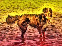 Magic Berner Sennenhund 2 von kattobello