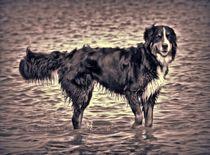 Berner Sennenhund in schwarz und weiß 3 von kattobello