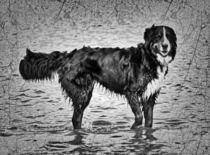 Retro Berner Sennenhund im Meer 1 von kattobello
