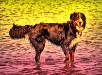 Magic Berner Sennenhund 1 von kattobello