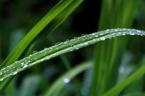 Rain on grass by Photo-Art Gabi Lahl