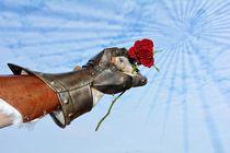 Der Gentleman - Hart aber Herzlich von Claudia Evans