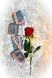 Die Rose der Liebe von Claudia Evans