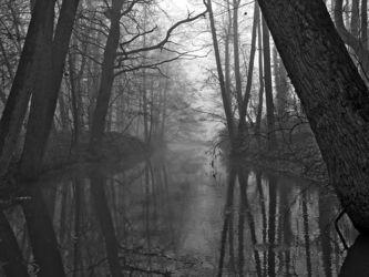 Nebelbbach