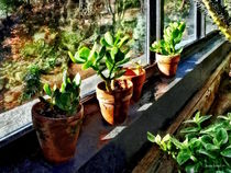 Jade Plants in Greenhouse by Susan Savad