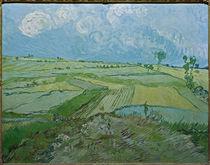 V. v. Gogh, Weizenfelder in Auvers von AKG  Images
