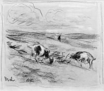 Liebermann / Goats grazing on dunes by AKG  Images