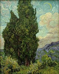 V. van Gogh, Zypressen by AKG  Images