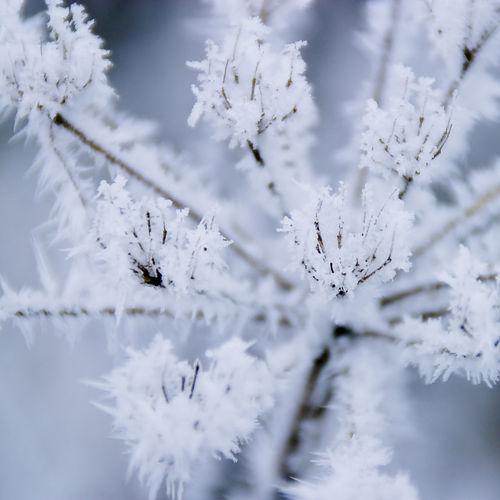 Frozen04