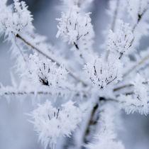 frozen_flowers_04