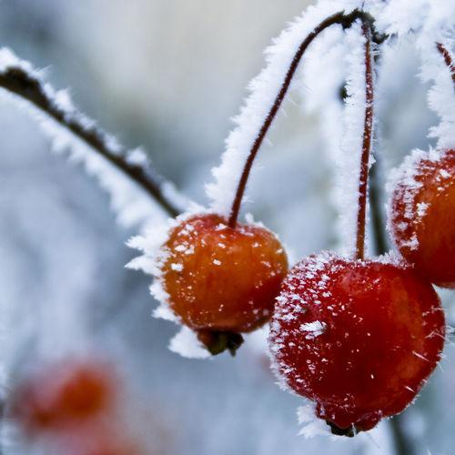Frozen05