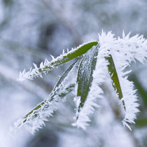 Frozen06