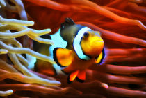 Farbenfroher Anemonenfisch  by kattobello