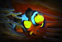 Leuchtender Anemonenfisch by kattobello