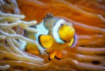 Anemonenfisch im Korallenriff 1 by kattobello