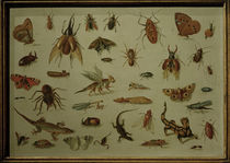 J. van Kessel t. E. / Insects and Reptiles by AKG  Images
