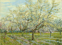 The White Orchard / V. van Gogh / Painting, 1888 by AKG  Images