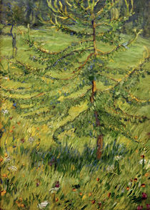 Franz Marc, Young larch in a meadow by AKG  Images