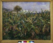 Renoir / Banana Plantation / 1881 by AKG  Images