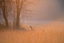 Licht by Jens Uhlenbusch