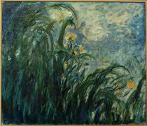 Monet / Yellow irises / 1924/25 by AKG  Images