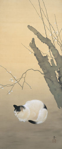 Hishida Shunso, Katze und Pflaumenblüten by AKG  Images