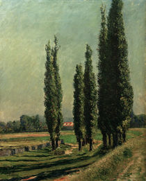 Caillebotte / Poplars on Dyke / 1889 by AKG  Images