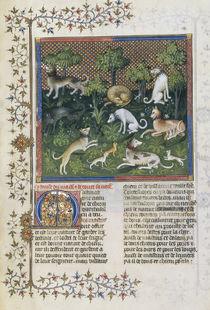 Jagdhunde (Mastiff) / Livre de la Chasse by AKG  Images