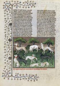 Versch. Jagdhunde / Livre de la Chasse von AKG  Images