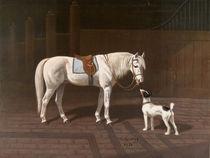 Pferd, Schimmel / nach H.Sperling von AKG  Images