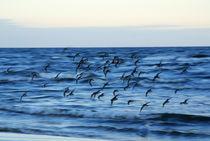 Vogelflug von Jens Uhlenbusch