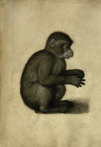 Affe / Aquarell, A.Dürer zugeschr. von AKG  Images
