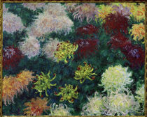 C.Monet / Chrysanthemum Bed / 1897 by AKG  Images