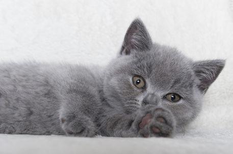 Dsc-5617-dot-bkh-kitten18-01-17