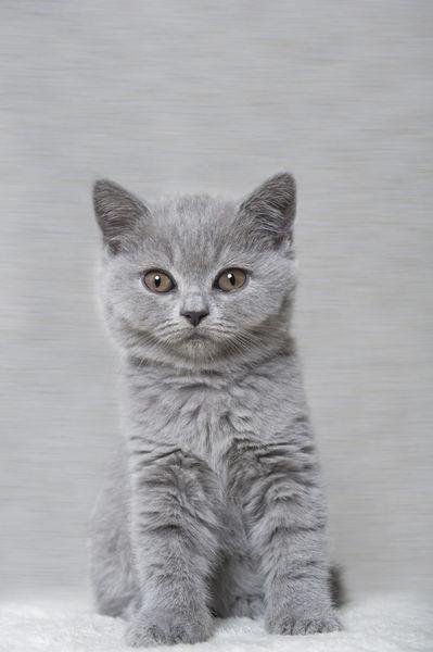 Dsc-5488-dot-bkh-kitten14t-01-17