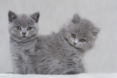 Dsc-5610-dot-bkh-blh-kitten3t-01-17