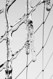 Netzeis von dresdner