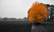Herbst von Jens Uhlenbusch
