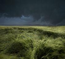 Regen by Franz Schumacher