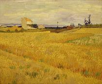 Van Gogh / Cornfield /  c. 1888 by AKG  Images