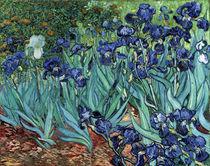Van Gogh / Iris (Schwertlilien) /1889 von AKG  Images