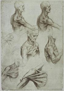 Leonardo / Hals– Schultermuskulatur/f. 136v by AKG  Images