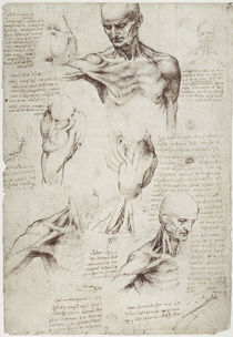 Leonardo / Hals– Schultermuskulatur/f. 137r by AKG  Images