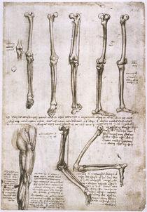Leonardo / Bewegung der Beinknochen/f. 140r von AKG  Images