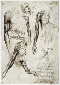 Leonardo / Armmuskeln u.–venen / fol. 141 r by AKG  Images