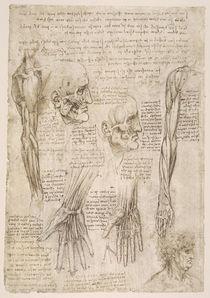 Leonardo / Arm– Hand– Gesichtsmuskel/f142v by AKG  Images