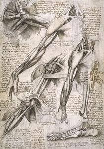 Leonardo / Schulter– Armmuskel/Fuß/f. 144 v von AKG  Images