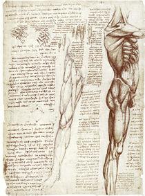 Leonardo / Rumpf– Beinmuskulatur / fol. 148 v by AKG  Images