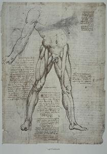 Leonardo / Oberschenkelmuskulatur/f. 148 r by AKG  Images